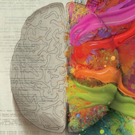 Left Brain Right brain myth